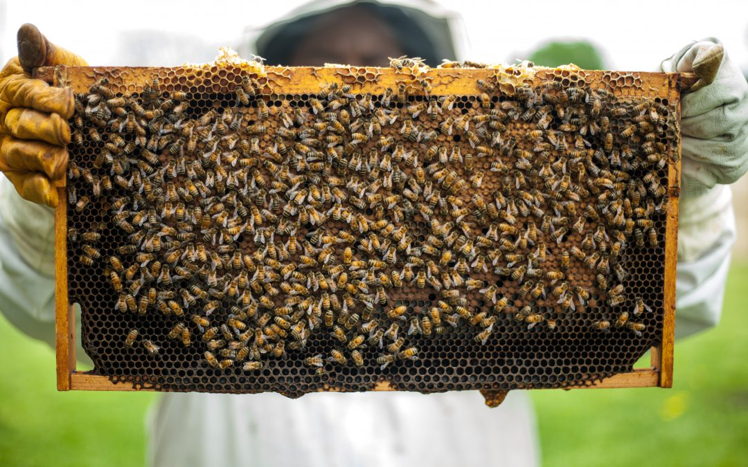 Ventilator Bellows and the Secret Life of Bees
